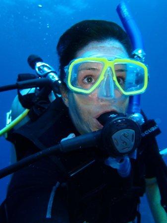 Hamanasi Adventure and Dive Resort: Diving