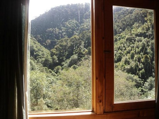 Quetzal Valley Cabins: The view out the window