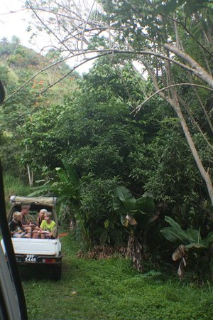 Tobago Now Off Road Jeep Safari