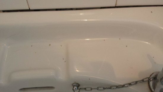 The Hop Pole: sink full of bugs