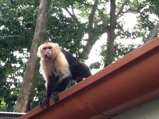 Arenas del Mar Beachfront and Rainforest Resort, Manuel Antonio, Costa Rica: A visitor while we ate breakfast