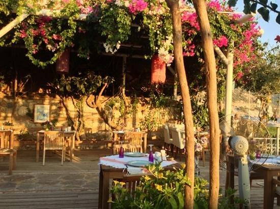 Oyster Restaurant: the veranda
