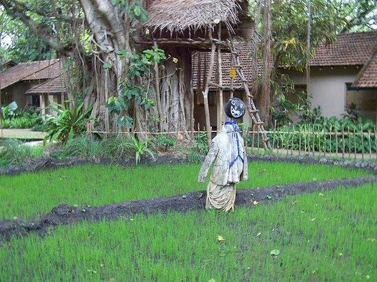 Sigiriya Village Hotel: interesting landscaping design
