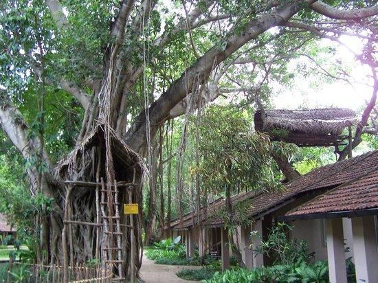 Sigiriya Village Hotel: monkey tree houses