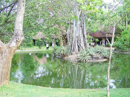 Sigiriya Village Hotel: tropical landscaping