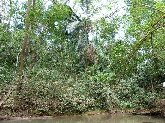 Blue Hole National Park: Surrounded by beautiful Belizean jungle