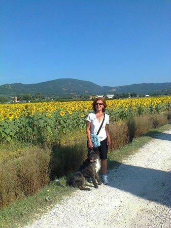 Agriturismo Biologico La Cortevilla: con Vasco tra i girasoli