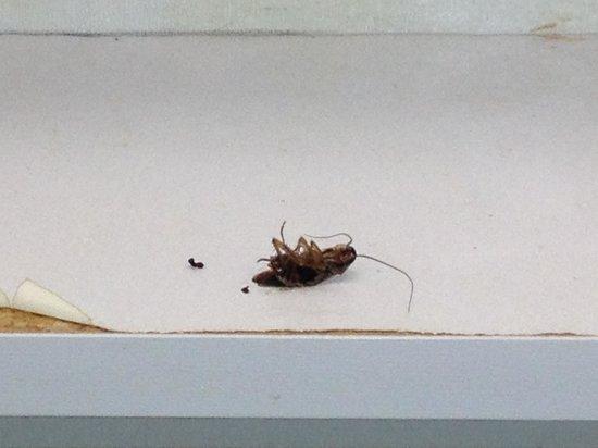 Grand Prix Motel: That's a roach