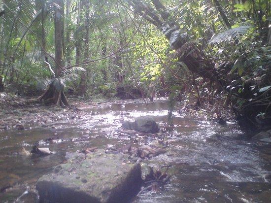 Cockscomb Basin Wildlife Preserve : Idealic