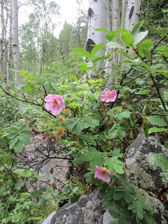 Golden Gate Canyon State Park: wildflowers are beautiful in the summer month