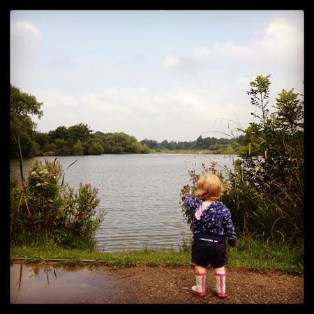 Hatfield Forest Nature Reserve: watching the ducks on the lake