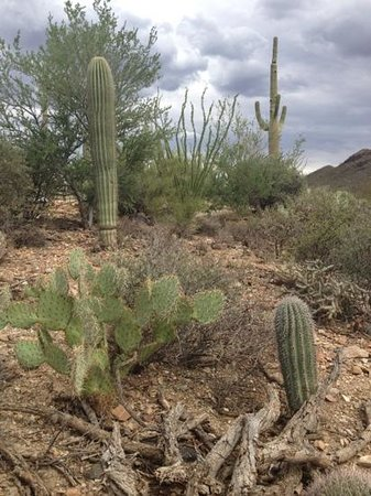 Arizona-Sonora Desert Museum: local desert