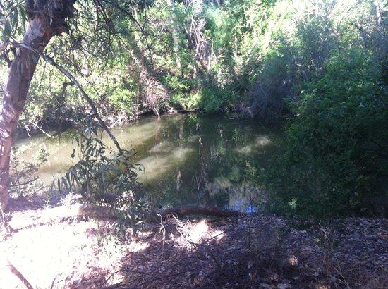 Vasona Lake County Park: Surroundings