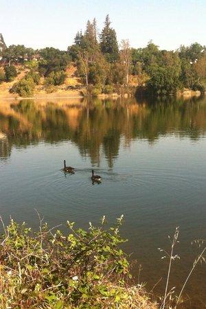 Vasona Lake County Park: Ducks