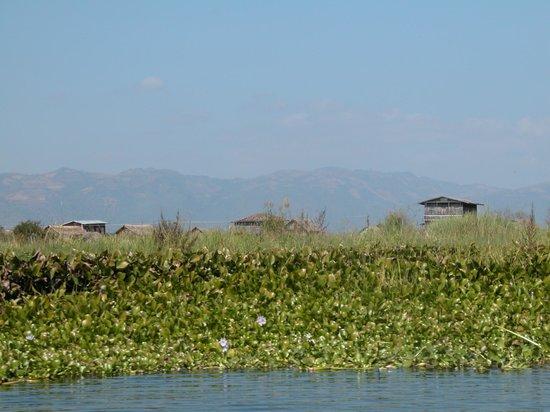 Nanda Wunn Hotel: Floating farms at Inlay lake