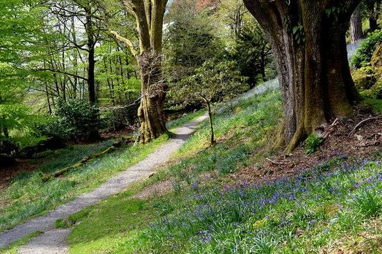 Dora's Field: Gentle footpath