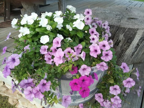 Chuckwagon Inn Bed & Breakfast: Beautiful flowers everywhere