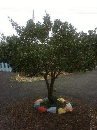 Bajo los Tilos: El pequeño árbol te da la bienvenida