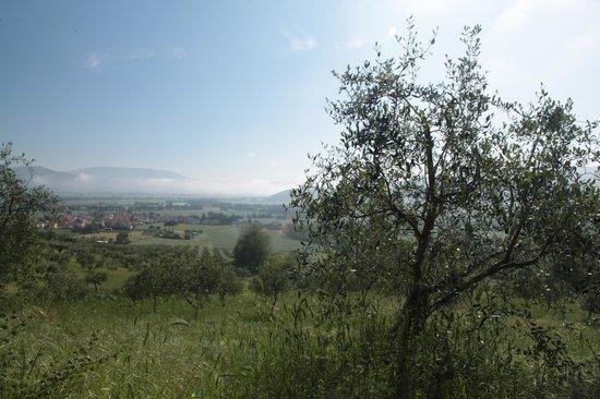 Le Terre di Isa: Aussicht aus dem Zimmer