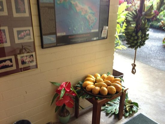 Dolphin Bay: Lobby area: Fresh fruits by the bunch