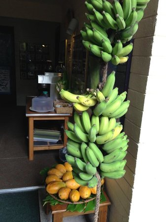 Dolphin Bay: Fresh Picked Apple Bananas & Papaya, Coffee & Banana Bread