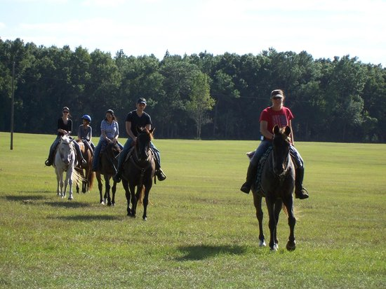 Sorrento, FL: We have horses for all types of riders