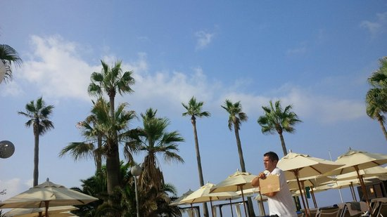 Don Carlos Leisure Resort & Spa: Palm Trees with limited foliage