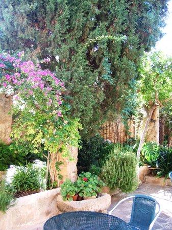 Can Tem : le jardin