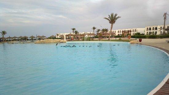 Gorgonia Beach Resort : Big pool