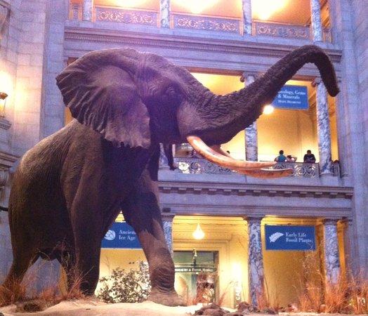 Smithsonian American Art Museum: 入り口でパオちゃんのお出迎え