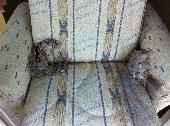 Merada Hotel: Karı apart ta yuva yapmış eşek arıları. (Boş apart)