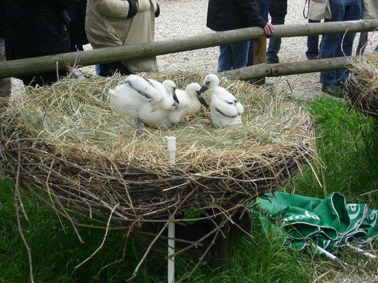 Gites Horcher : jardin des loutres et des cygognes