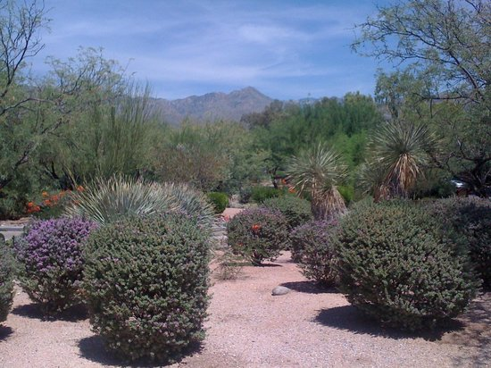 Canyon Ranch in Tucson : View of Catalina Foothills from a Private Casita