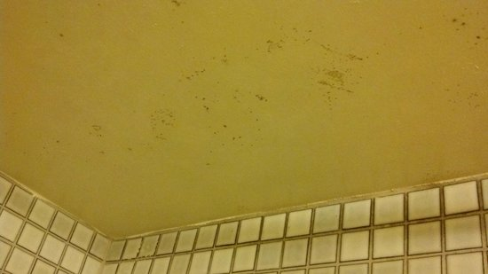 Aston at the Executive Centre Hotel: Mold in Bathroom