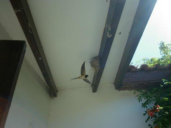 Vasilias Nikoklis Inn: swallows