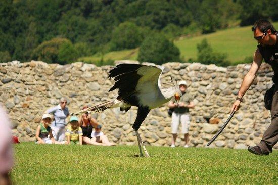 Dungeon of Eagles: En medio de la sesión