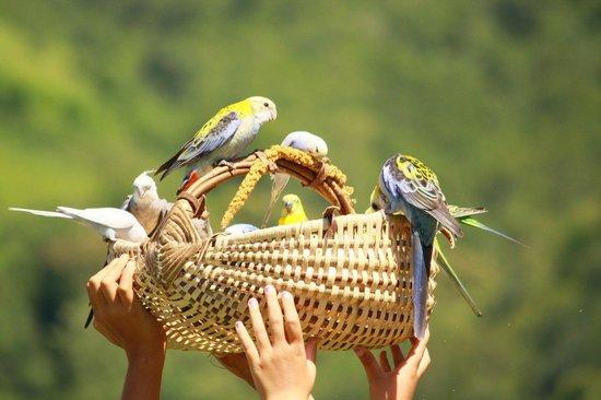 Dungeon of Eagles: Publico participando