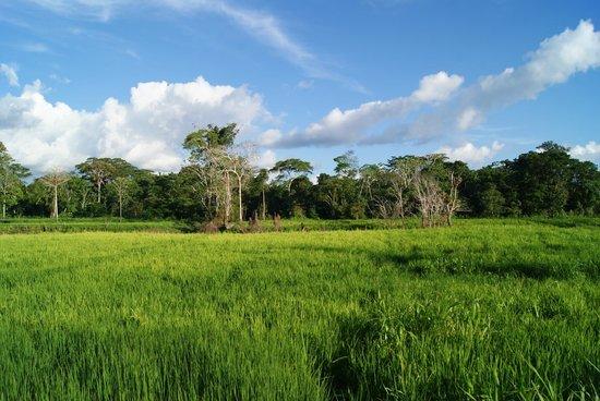 Hotel La Maison: trip por la selva