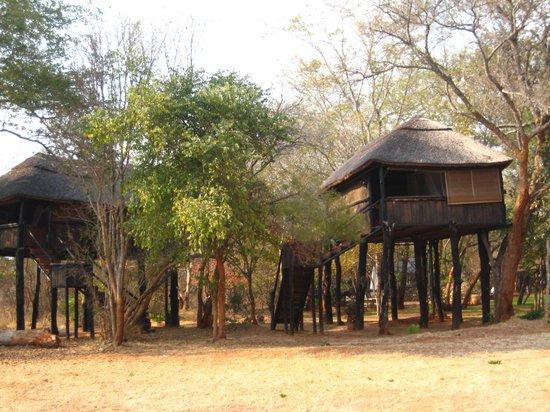 Ivory Lodge: こんな小屋が10棟ほど建っています