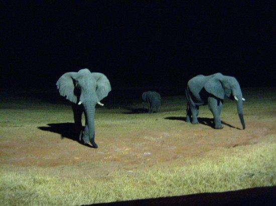 Ivory Lodge: 夜、見張り小屋から見た象の親子