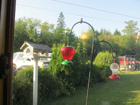 Bear Trap Inn: Our favorite window had hummingbirds feeding right in front of us