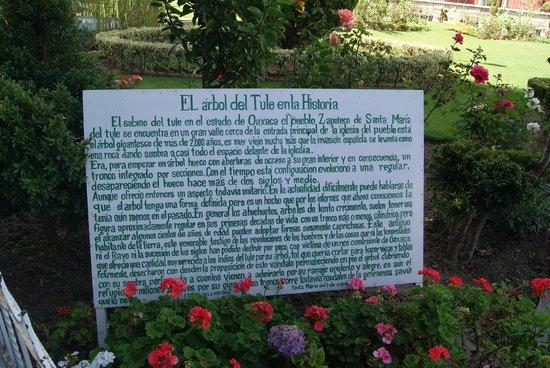 El Tule Tree of Life, Teotitlan Village, and Mitla Ruins Tour: El tule y su historia...