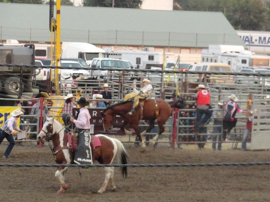 MetraPark: Yellowstone Roundup Rodeo