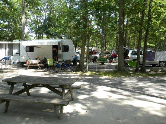 Terrain D04 Picture Of Seashore Campsites Amp Rv Resort
