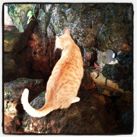 Maison Tulum: Kitty on the Premises