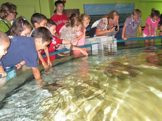North Carolina Aquarium on Roanoke Island: Fun time