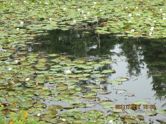 Atlantic View Motel & Cottages: The Lily Pond up close.