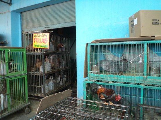 Santiago de Chile, Estación Central. Mercado venta de gallinas, gallos, conejos, patos y galline