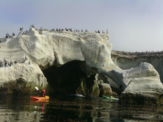 Pismo Beach Dive Shell Dinosaur Caves Kayak Tour With Bch