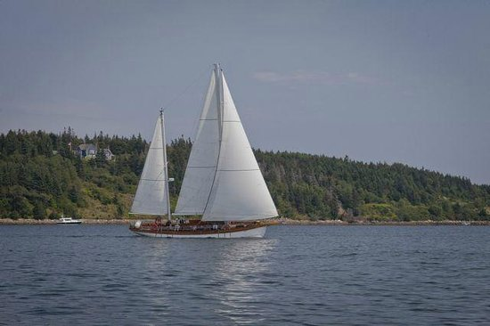 Lunenburg Whale Watching Tours : Charter boat sailing out as we returned